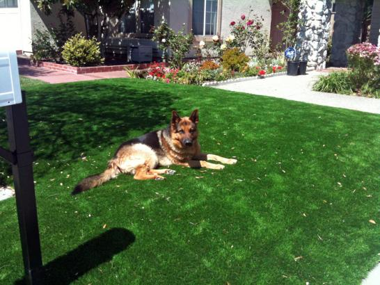 Artificial Grass Photos: Lawn Services San Dimas, California Pictures Of Dogs, Front Yard Landscaping Ideas